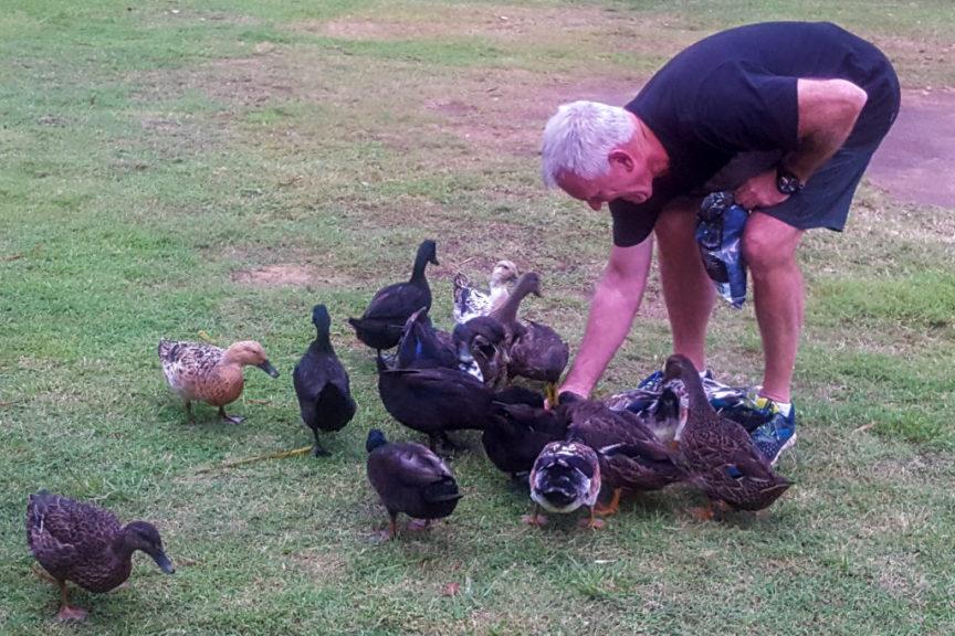 Narrabeen Ducks
