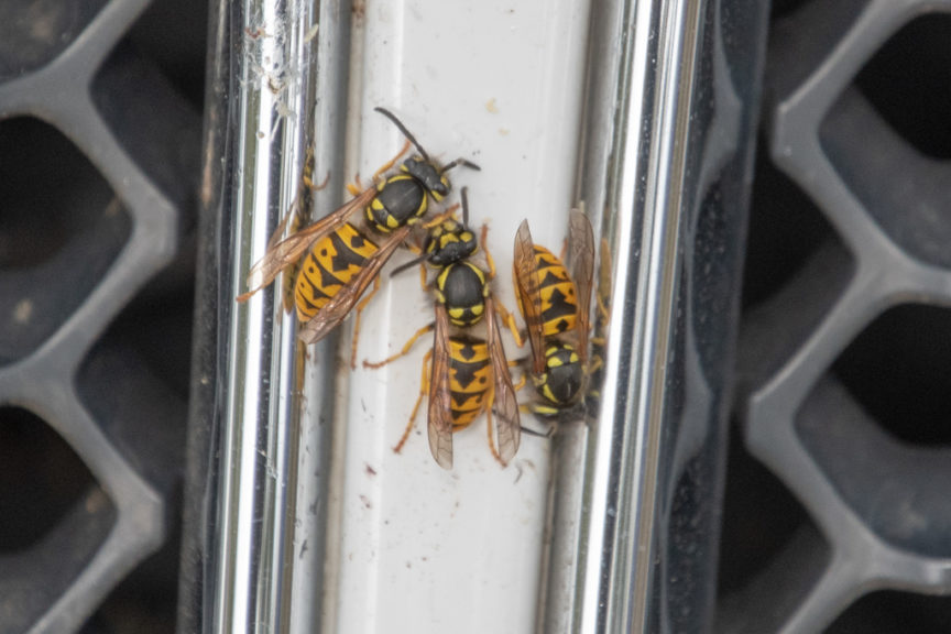 Euro Wasps cleaning the car