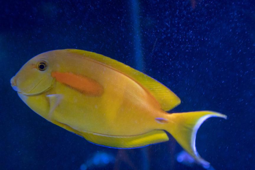 Fish tank in the loo