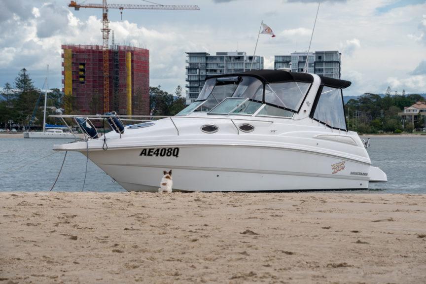 Wavebreak Island - dog guards boat