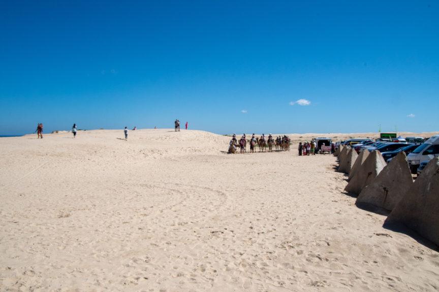 Camel rides - Birubi Beach